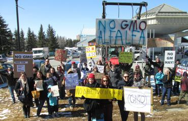 Calgary-crowd-says-No-GMO-Alfalfa-in-really-big-letters_large