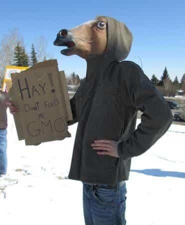 Calgary-horses-say-no-GM-alfalfa_large