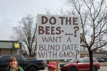 Do-the-Bees-Want-a-Blind-Date-with-GMOs_large