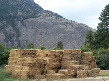 Alfalfa-bales-ready-for-transport_large