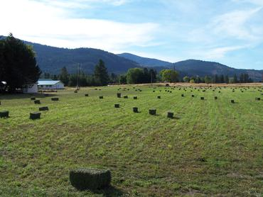 Alfalfa-hay-bales-in-the-field_large