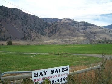 Hay-for-Sale_large