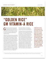 « Golden Rice » Vitamin A Rice